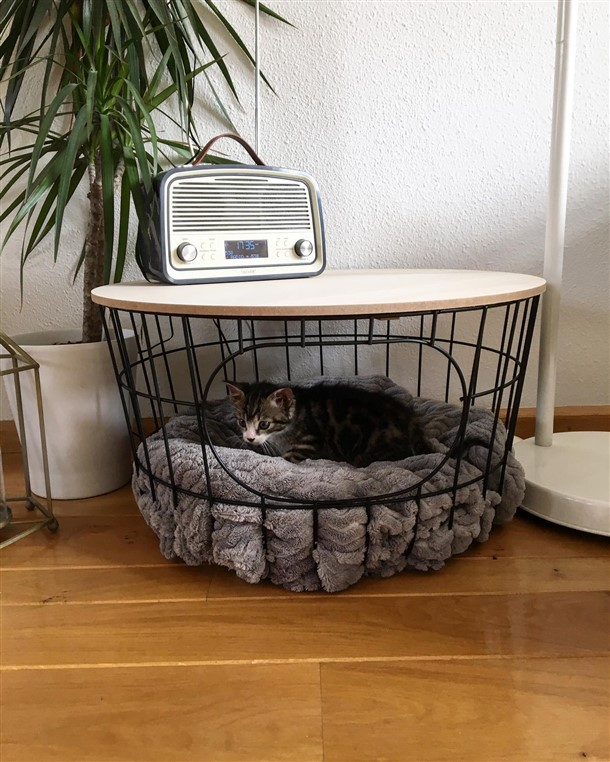 Impressive Coffee Table Cat Bed Ideas with Double Funciton ...